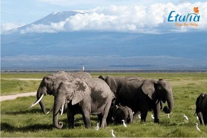 Sejururi exotice Kenya
